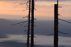 Silence. Stille (Xtraphoto) Tags: nebelig nebel fog wald forest bayern bavaria landscape landschaft trees tree bume baum sunrise sonnenaufgang ruhe stille silence