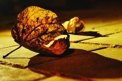 #explored (25/10/2016) HMM- Autumn is coming.... (kanchanmala.yadav) Tags: