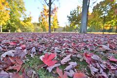 Couleurs d'automne (oncle_john) Tags: automne fall arbre tree feuille parc ttedor lyon france onclejohn canon 5d mark3 5d3 mk3 momentsdecapture