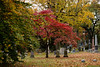 (dicksoto) Tags: nyc red ny newyork fall leaves brooklyn unitedstates autum greenwoodcemetery tombstones