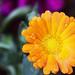 Una gotas y una flor