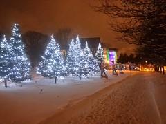 Sapins illumins au parc de l'Amrique-Franaise (CCNQ) Tags: capitale nol nationale clairage sapins sapinsdenol miseenlumire ccnq parcdelamriquefranaise commissiondelacapitalenationaleduqubec clairagefestif