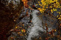 _DSC7446 (andoni.guridi) Tags: autumn fall spain otoño navarra 2014 basaburua