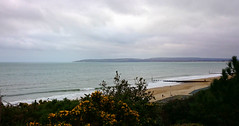 Grey day... (SteveJM2009) Tags: uk flowers winter light sea seascape beach yellow clouds grey sand december phone shore dorset seafront z1 bournemouth gorse stevemaskell 2014 poolebay xperia