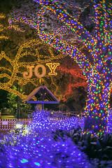 Houston Zoo Lights - Joy Lights (Mabry Campbell) Tags: november blue trees usa word pho