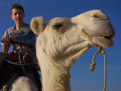 Camel Riding (Sergiy Matusevych) Tags: africa family kids george travels ride camel morocco essaouira olympus1240mmf28