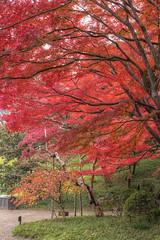IMG_0178_180  HDR (vicjuan) Tags: japan geotagged tokyo maple   bunkyo hdr    tonemapping  koishikawakorakuengardens 20141129 geo:lat=35705544 geo:lon=139749108