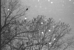 (HaydenKlein) Tags: portrait bw white black color film nature girl beautiful 35mm canon focus kodak trix grain tint dirt saturation mistake dust t2