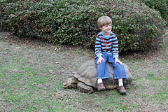 2015tortridecars (babyfella2007) Tags: pictures ocean old school winter boy red sky people woman playing jason man color fall sc nature water beautiful face leaves animal vintage bug river garden carson children fun outside monkey pond oak gun child ride natural photos reptile antique live grant south father tortoise young mother michelle large son southern riding porch taylor carolina timeline glider broad beaufort ridgeland batesburg