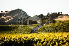 CALIFORNIA-775