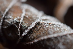 Frost (MsFungi) Tags: winter macro leaf frost