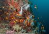2014 Maldives - GoPro 17820.jpg