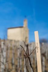 Vignoble (maxrafale) Tags: france rhne vin vignoble chapelle vigne colline valle rhonealpes