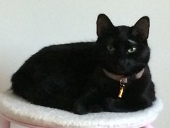Black beauty (jasminagrossauer) Tags: cats black beautiful cat blackcat sitting sittin blackbeautifulcatsittingcat