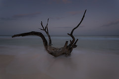distant star (Malajusted1) Tags: seascape beach saint almond peter driftwood barbados longboat carribbean norse speightstown