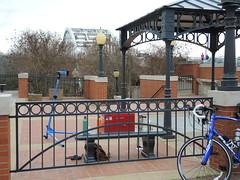 My Workstation at the Beginning (The Goat Whisperer) Tags: bridge bike bicycle march ride anniversary alabama civil rights montgomery 50th selma edmund pettus selma50ride