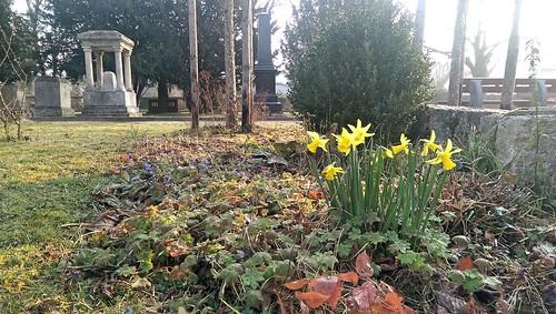 Frühling im Park der evangelischen Kirche Selzen