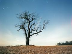 Night Sky (Daniel Regner) Tags: camera new winter light sky cold tree slr 120 mamiya film nature bulb