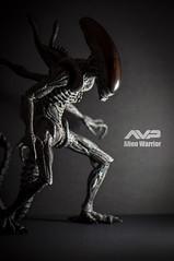 AVP Alien Warrior (ABKamleh) Tags: toy actionfigure alien warrior avp alienvspredator xenomorph hottoys nikkor105mmmicro nikond90