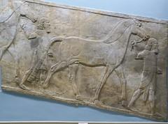 DSCN3028 (Nemoleon) Tags: june britishmuseum assyrian 2016 reliefsculpture