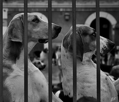 Class dogs !!! (poupette1957) Tags: life street urban dog black art canon french noir photographie noiretblanc humour curious rue bollards grandangle atmosphre humanisme imagesingulires