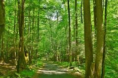 Forest drive (stevelamb007) Tags: road nature forest woods nikon tennessee shade gatlinburg nikkor18200mm stevelamb naturedrive d7200