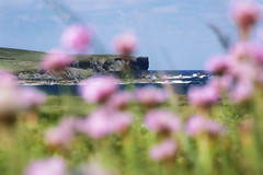 Like a dream, Co Clare, Ireland (Sean Hartwell Photography) Tags: countyclare loophead bridgesofross ireland eire landscape flowers coast coastal sea cliffs pink green