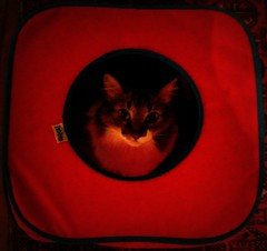 I'm the cat in the cube (:: through my eyes ::) Tags: gato cat gata srd katz kitty chat cubo cube red vermelho rouge