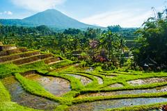 Jatiluwih - Bali (handokorama) Tags: bali handokorama handokoramaphotography tabanan jatiluwih ricefield rice field nature outdoor green sky landscape