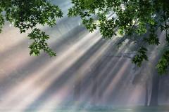 morning mist (Marc McDermott) Tags: mist trees summer sunlight beam light ef70200mmf28isusmii 5dmarkiii canon green leaves morning