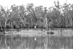 Water, strata, forest, air. (Michael Desimone) Tags: trees winter red beach water speed forest river fishing 4 fast australia victoria gums number strata land murray thompsons knotts wattle stratum cobram