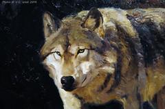 Wolf (detail), Ken Carlson (V. C. Wald) Tags: wolf jacksonhole grandtetonnationalpark wildlifeart jacksonwyoming kencarlson nationalmuseumofwildlifeart