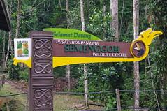 Semenggoh Wildlife Center, Kuching, Sarawak, Malaysia (ARNAUD_Z_VOYAGE) Tags: orang utan semenggoh wildlife center kuching sarawak malaysia federal territory national capital city landscape south east asia street market island borneo