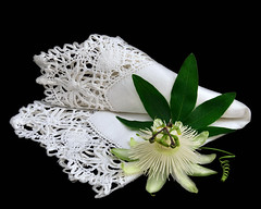 Passion & Lace (njk1951) Tags: passiflora passionflower flower passion whitepassionflower passiflorasnowqueen handkerchief antiquehandkerchief tendril leaf passifloraleaf blackbackground imageonblack stilllife lace crochetedlace blossom