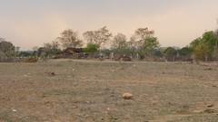 KhajurahoCycling002 (tjabeljan) Tags: india khajuraho cycling platteland village dorp