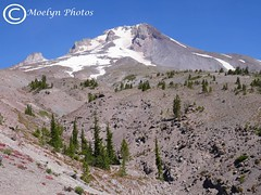 Mount Hood Up Close and Personal (moelynphotos) Tags: mthood oregon mountain snowcovered peak scenics landscape trees highaltitude moelynphotos