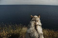 Palisade Head (jayjay.and.the.wolf) Tags: lakesuperior hikingwithdogs minnesota palisadehead nikon hiking camping malamute