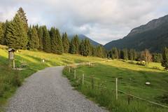 (elisabeth_holzner) Tags: tannheimertal grn wandern weg wanderweg tirol tyrol wiese weide berge landschaft landscape austria flower mountain hiking