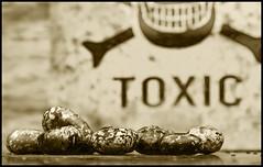 Ricinus Communis Seeds (ST-251) Tags: macromondays handlewithcare macro mondays handle with care ricin toxic poisonous evil chemical weapon castor beans ricinus communis seeds sepia