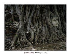 Ayutthaya Buddha (dogs857) Tags: tree buddhist
