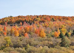 Colorful hillside (Explored 10-23-16 all my thanks!) (outdoorpict) Tags: fall color green red yellow brown blue hardwoods deciduous pine sunny bushes hillside leaves