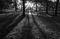 Riverside Park, NYC (Joe Josephs: 2,861,655 views - thank you) Tags: joejosephsphotography nyc newyorkcity photojournalism streetphotography landscapephotography landscapes urbanparks blackandwhitephotography blackandwhite riversidepark