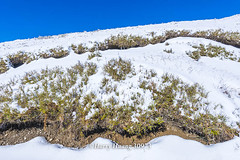Harry_30973,,,,,,,,,,,,,,,,,,,Winter,Snow,Hehuan Mountain,Taroko National Park,National Park (HarryTaiwan) Tags:                   winter snow hehuanmountain tarokonationalpark nationalpark     harryhuang   taiwan nikon d800 hgf78354ms35hinetnet adobergb  nantou mountain