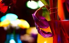 four vases for the fallen (TaglessKaiju) Tags: tabletop flowers october table vase vases sunflowers dried died broken stem blur