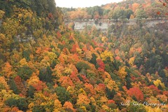 IMG_9296 (Sally Knox Sakshaug) Tags: letchworth state park new york fall autumn october colors leaf leaves orange yellow stone grey gray brown green red beautiful pretty scenic gorge ravine cliff wall edge side river water valley deep crevice genesee portagecanyon