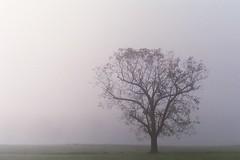 fog (catherinemcloughlin) Tags: tree canonae1 gloomy fog 35mm film