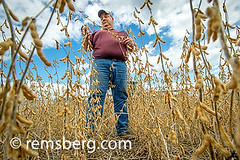 Farmer checking soybeans in Laytonsville, Maryland, USA (Remsberg Photos) Tags: usa man field farm inspection harvest maryland crop ag farmer soybean agriculture laytonsville