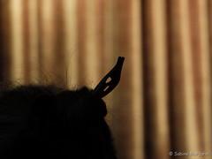 Aufgespiesst (Sockenhummel) Tags: dinner hair essen fuji kirche frisur finepix fujifilm fest x20 gemeinde haare feier eisbein kasseler beisammensein eisbeinessen philippmelanchthon fujix20 fürbitt annualeating