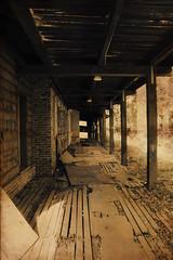 A Walk Down Memory Lane (CaledoniaEHanson) Tags: wood old abandoned college rotting photography photo weeds photograph urbanexploring jesuit