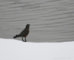 Winter Robin (J.S.M Photography) Tags: winter robin hintofcolor winterrobin